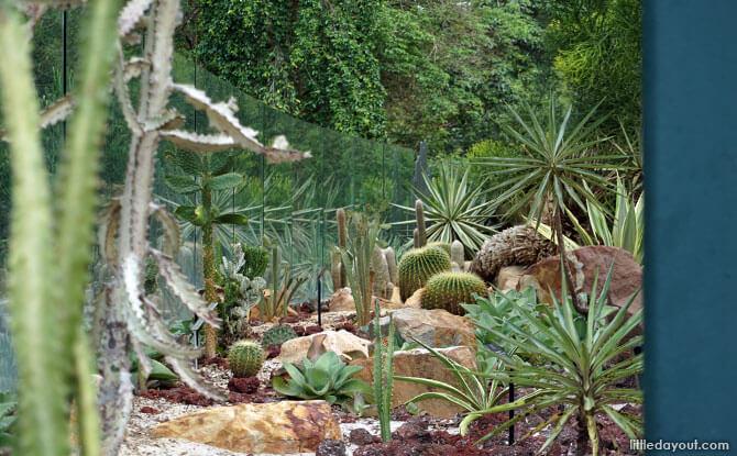 Visiting Singapore Botanic Gardens Sun Garden