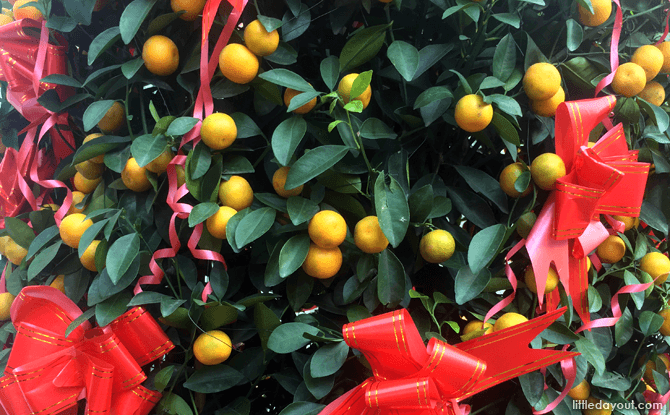 Tangerine plant for Chinese New Year