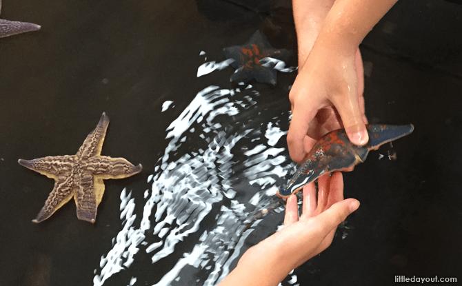 Touch pool, Otaru Aquarium
