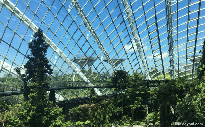 Tree Top Walk, Gardens by the Bay Cloud Forest