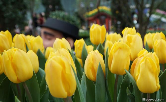 Giants in the tulip fields