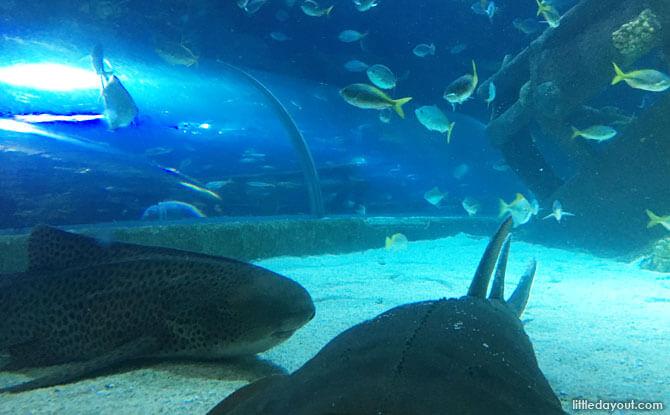 Underwater tunnel at AquariaKLCC