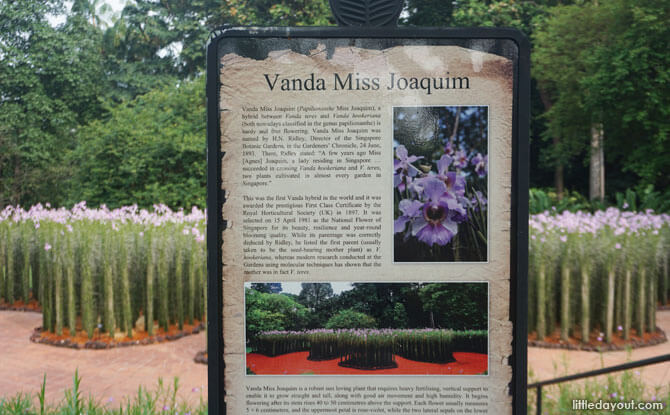 Read about the history of Singapore's national flower at the Vanda Miss Joaquim Display when you visit Singapore Botanic Gardens