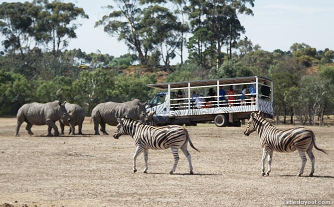 Off Road Safari at the Werribee Open Range Zoo
