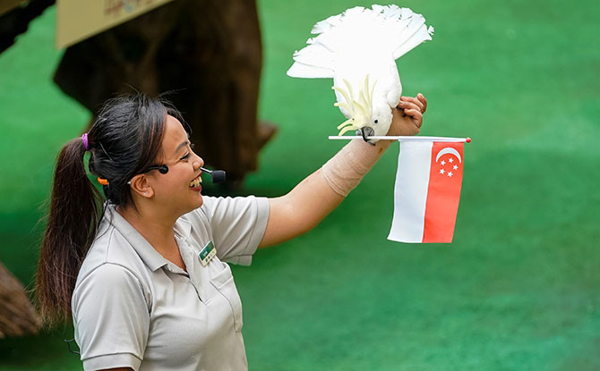 """55"" Promotions At Singapore Zoo And Other Wildlife Parks For National Day 2020"