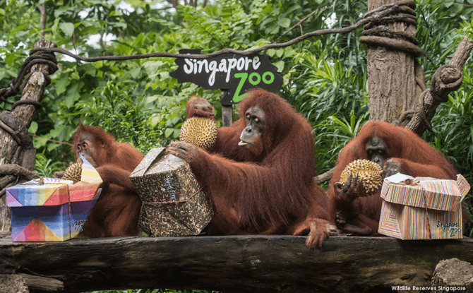 Singapore Zoo's 44th Birthday Celebration