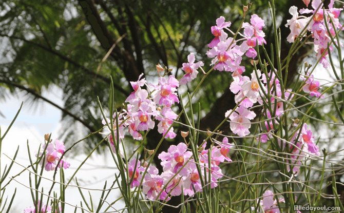 Free Entry To National Orchid Garden From 24 October To 1 November 2020