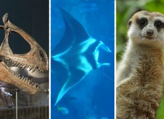 3 Wild Adventures That Await During Singapore June School Holidays 2019: Circle Of Life Festival, Ocean Fest 2019 And DinoQuest