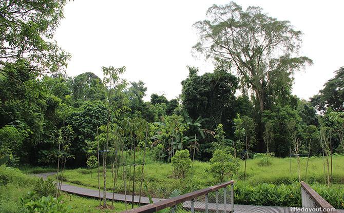 Windsor Nature Park's Hanguana Trail