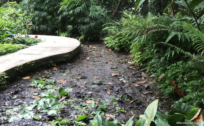 Marsh Garden