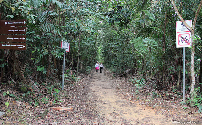 Path from MacRitchie Park