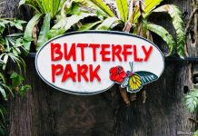 Butterfly Park & Insect Kingdom, Sentosa: Fluttering Butterflies & Exotic Insects