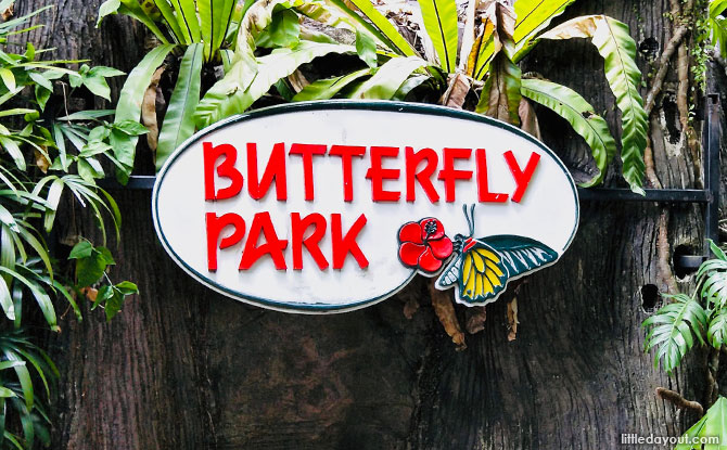 e01-butterfly-park-insect-kingdom