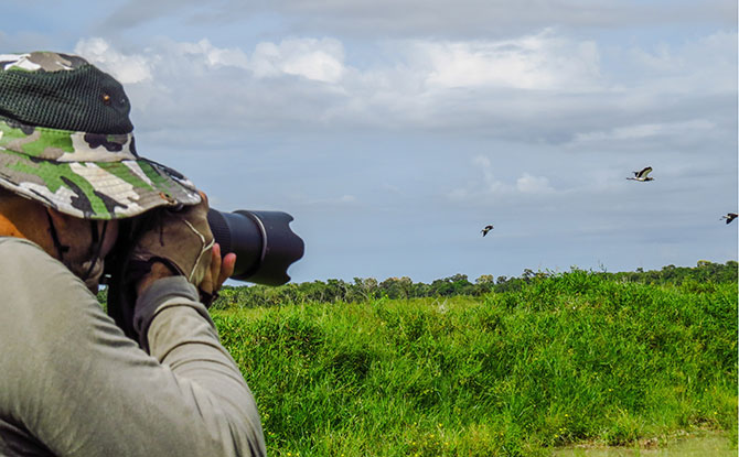 Where To Spot Migratory Birds In Singapore