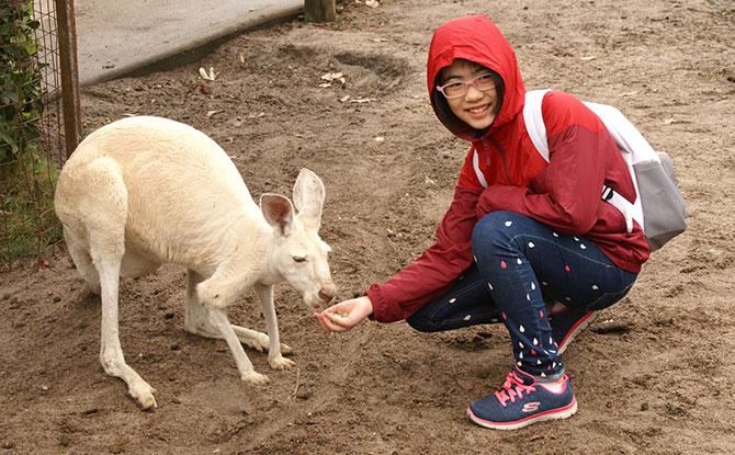 Visiting Perth, Australia: Kangaroo Dreams
