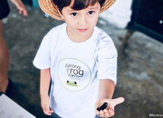 Jurong Frog Farm: A Ribbiting Good Time