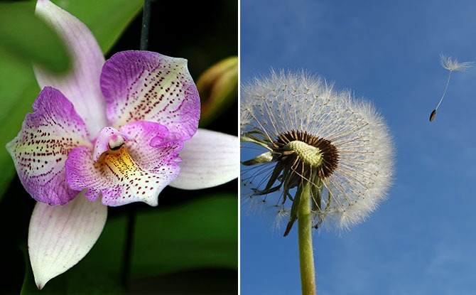 The Orchid and the Dandelion - Parenting a Sensitive Child