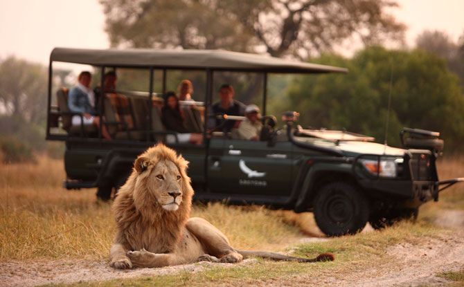Virtual Visit to South Africa Game Reserves