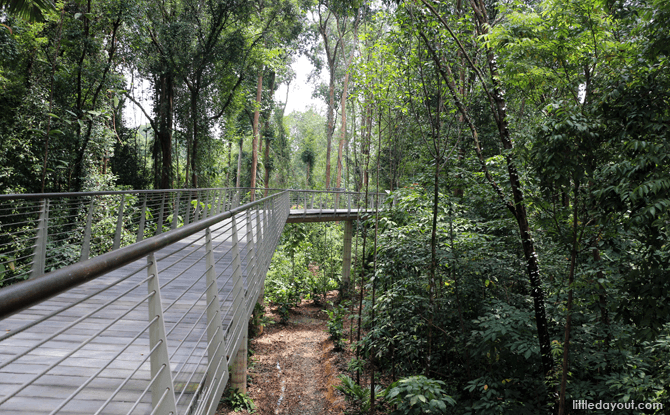 Boardwalk at SPH Walk of Giants is About 8 metres off the ground