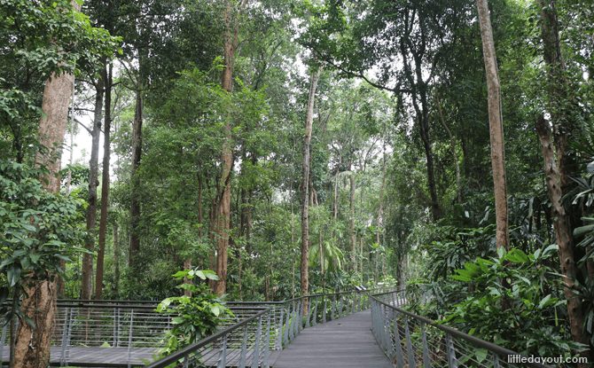 Elevated Boardwalk at SPH Walk of Giants, Learning Forest