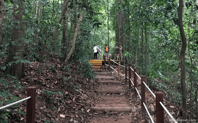 Marked paths with rope rails at Bukit Timah Nature Reserve