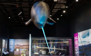 e02 Virtual Museum Tours for Kids Credit Smithsonian National Museum of Natural History