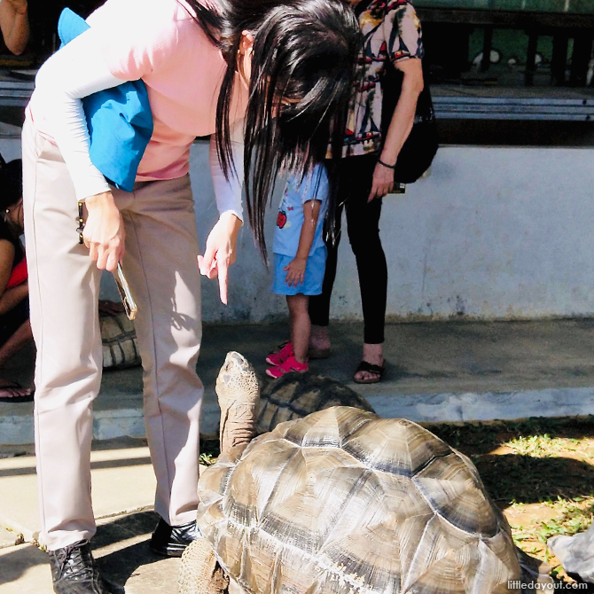 The Live Turtle And Tortoise Museum At Orto
