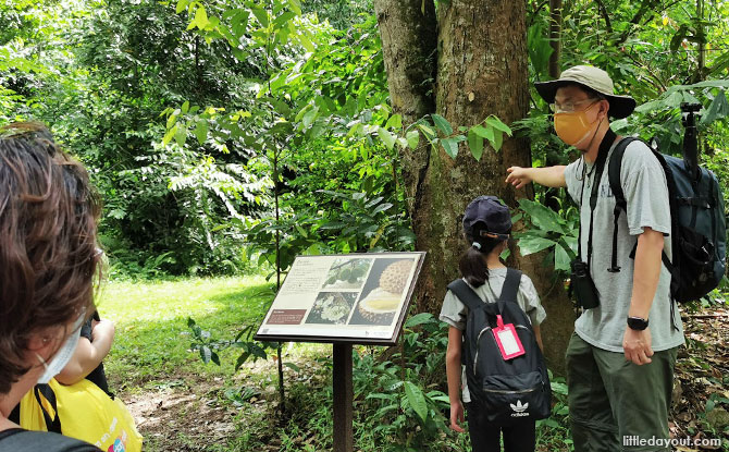 Pulau Ubin Sensory Trail: A Less Trodden Path Worth Exploring