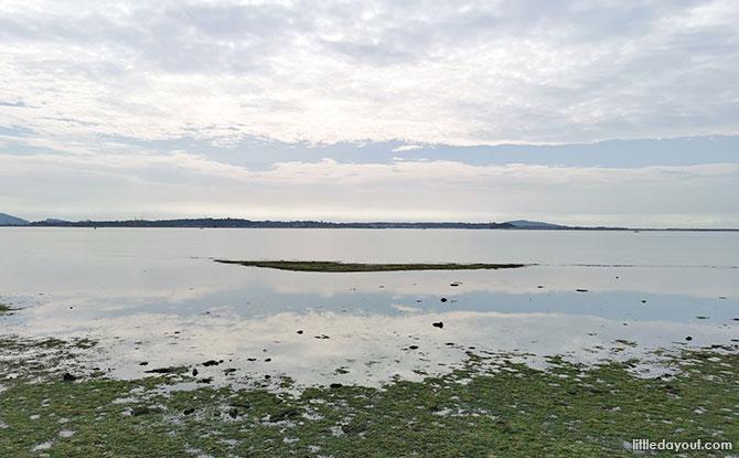 Pulau Ubin Chek Jawa Horizon