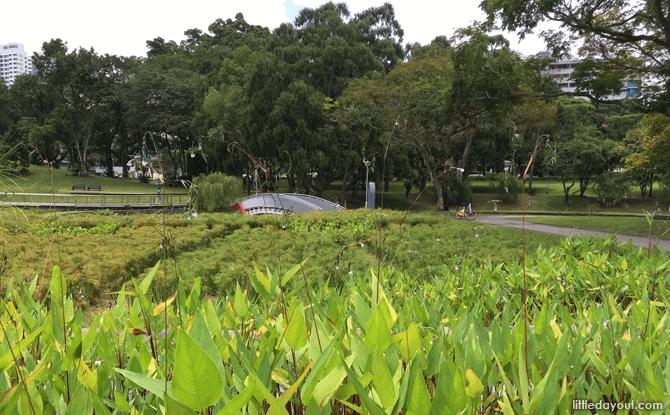 Lush greenery at Bishan-Ang Mo Kio Park