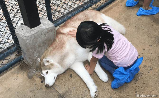 TrueLove at Neverland Husky Cafe, Bangkok