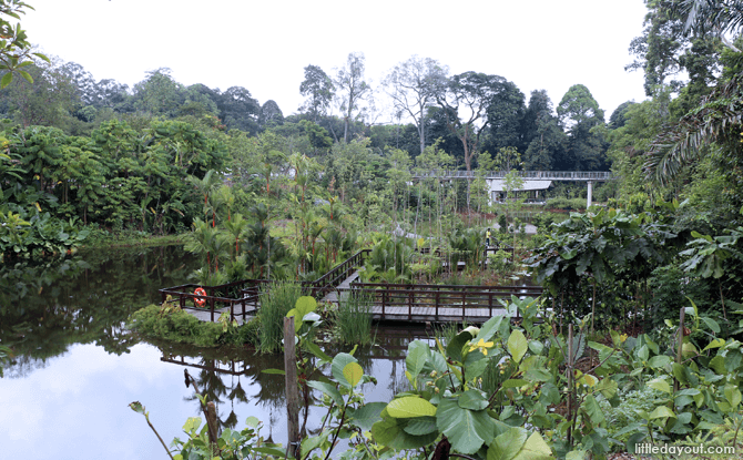 Keppel Discovery Wetlands, Learning Forest
