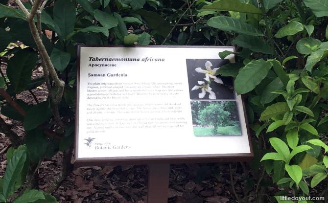 Panels describing the plants at Fragrant Garden