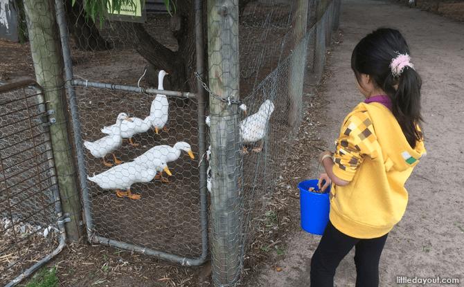 Animals at Sunflowers Animal Farm