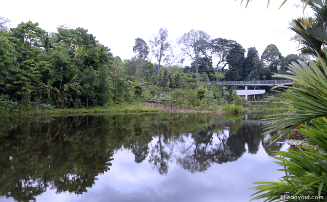 Singapore Botanic Gardens' Learning Forest