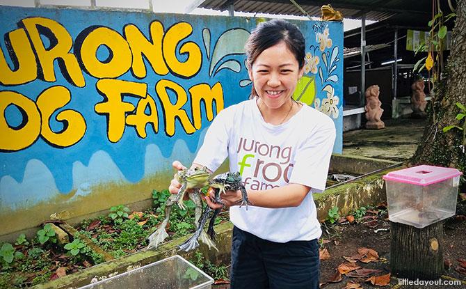 e03-jurong-frog-farm