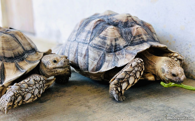 Tortoises at the Live Turtle and Tortoise Museum