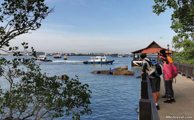 Mangrove habitat and Purple Climber Crabs near the jetty