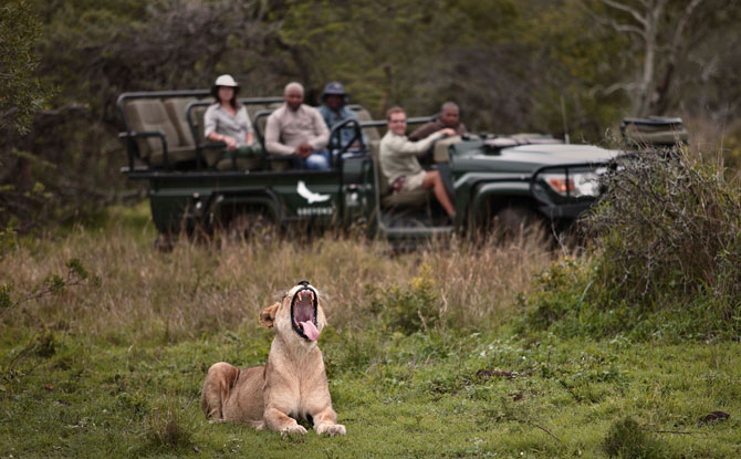 Private Virtual Safari Tours - &Beyond