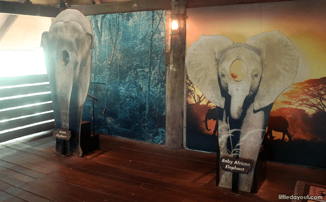 Elephants of Asia - Visiting the Singapore Zoo