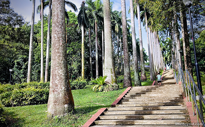 Trees with paved steps