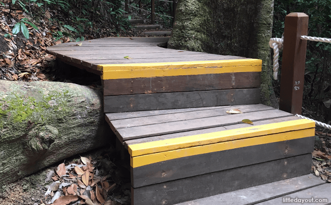 Boardwalks to Protect Tree Roots at Bukit Timah Nature Reserve