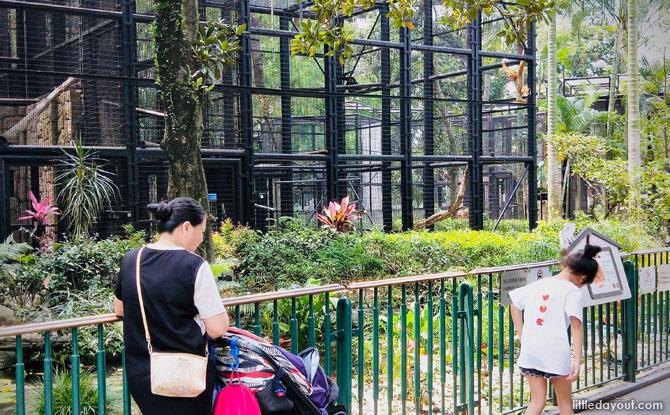 Aviaries and Mammal Enclosure