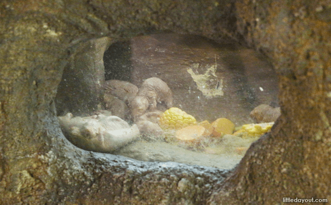 Visiting the Singapore Zoo - Mole-rats
