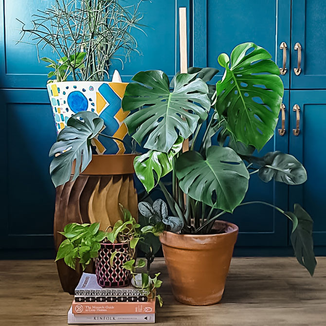 House plants for home