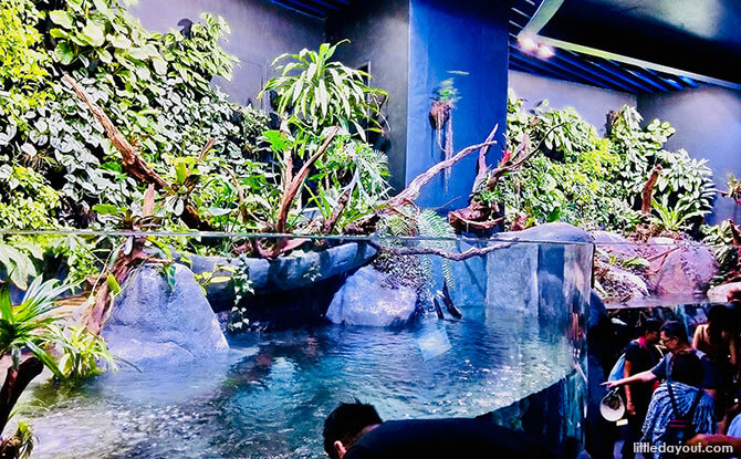 Habitats at the SEA Aquarium, Resorts World Sentosa