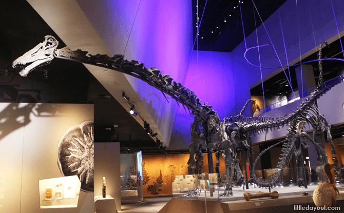 Dinosaurs, Lee Kong Chian Natural History Museum