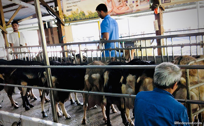 Kranji Countryside: Hay Dairies Goat Farm