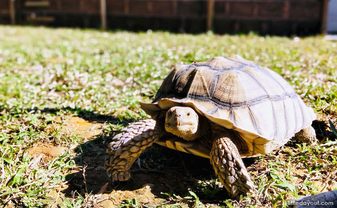 Free-Range Tortoises