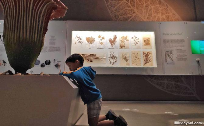 Visit Museums